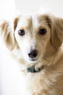 f:id:dog_life_saving:20121111200656j:image