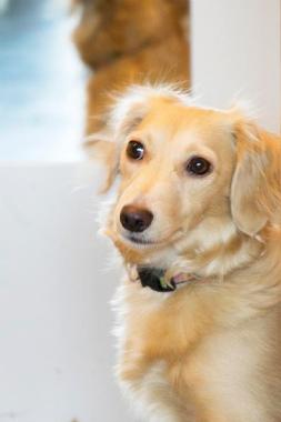 f:id:dog_life_saving:20121111200657j:image
