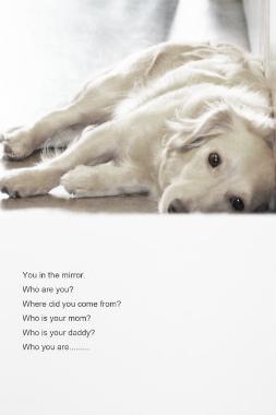f:id:dog_life_saving:20121111200658j:image