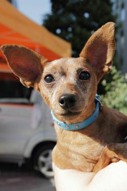 f:id:dog_life_saving:20121112212503j:image