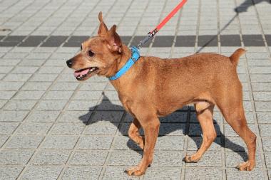 f:id:dog_life_saving:20121112212504j:image
