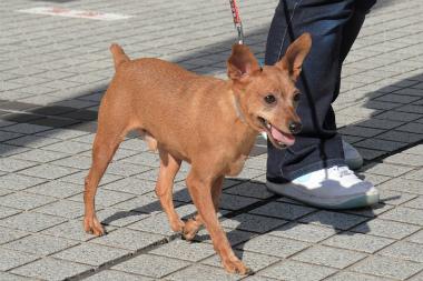 f:id:dog_life_saving:20121112212505j:image