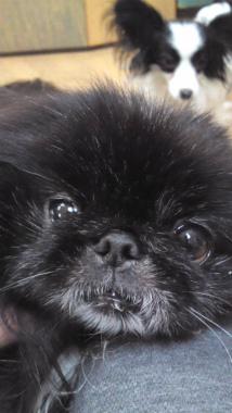 f:id:dog_life_saving:20121201231002j:image