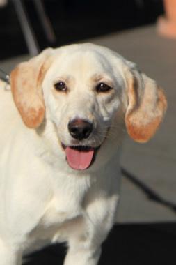 f:id:dog_life_saving:20121209113237j:image
