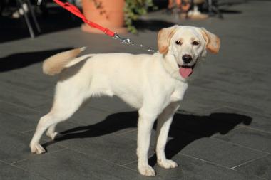 f:id:dog_life_saving:20121209113239j:image