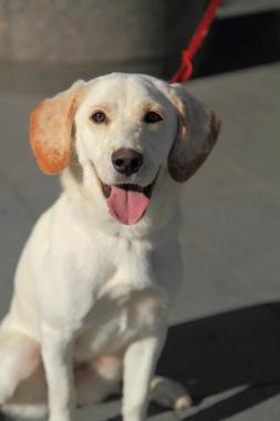 f:id:dog_life_saving:20121209113240j:image