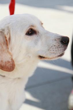 f:id:dog_life_saving:20121209113243j:image