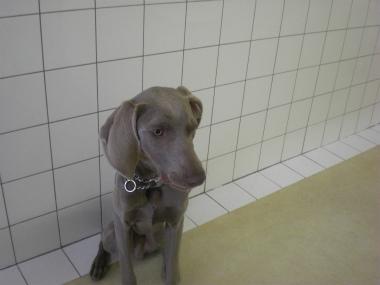 f:id:dog_life_saving:20121209114932j:image