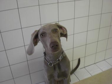f:id:dog_life_saving:20121209114933j:image
