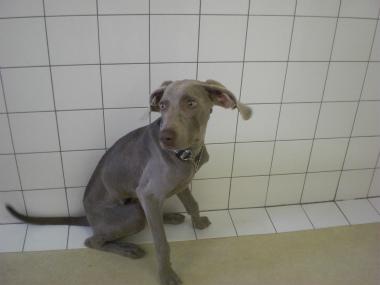 f:id:dog_life_saving:20121209114936j:image