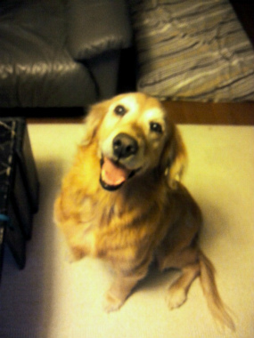 f:id:dog_life_saving:20121224123652j:image