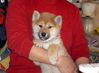 f:id:dog_life_saving:20130103214246j:image