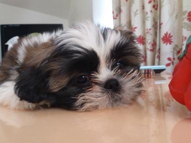 f:id:dog_life_saving:20130120193613j:image
