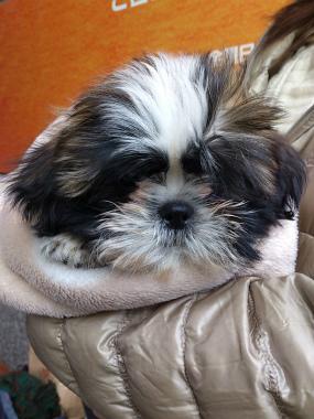 f:id:dog_life_saving:20130120193615j:image