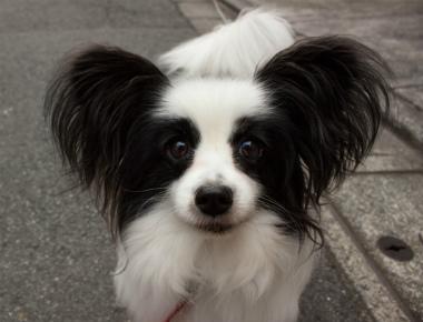f:id:dog_life_saving:20130126195923j:image