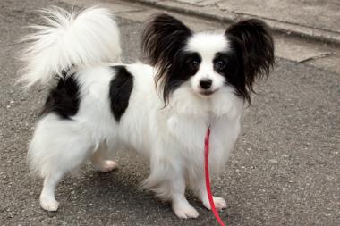 f:id:dog_life_saving:20130126195924j:image