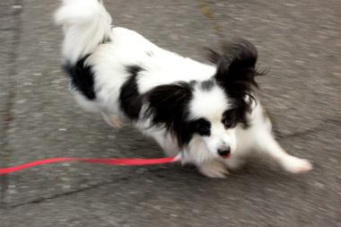 f:id:dog_life_saving:20130126195925j:image