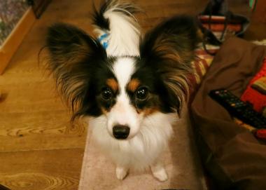 f:id:dog_life_saving:20130126201237j:image