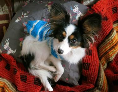 f:id:dog_life_saving:20130126201238j:image