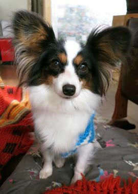 f:id:dog_life_saving:20130126201239j:image
