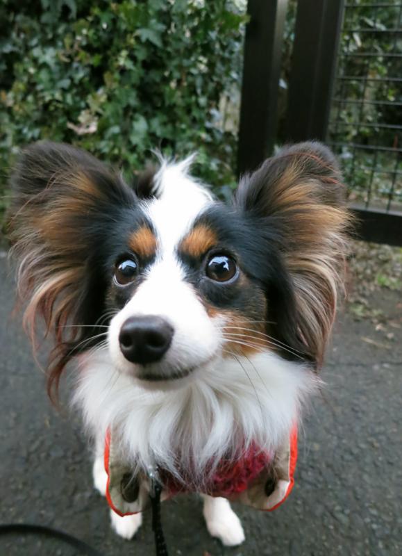f:id:dog_life_saving:20130126201241j:image
