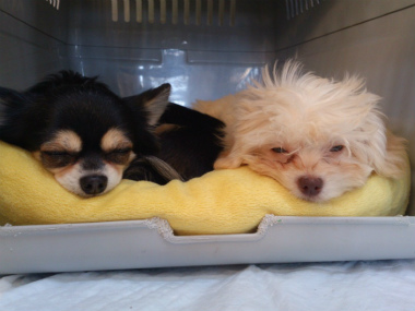 f:id:dog_life_saving:20130126225755j:image