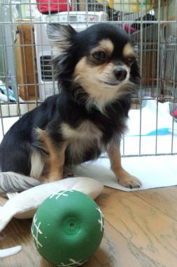 f:id:dog_life_saving:20130126225757j:image