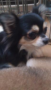 f:id:dog_life_saving:20130126225758j:image