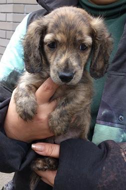 f:id:dog_life_saving:20130126230759j:image
