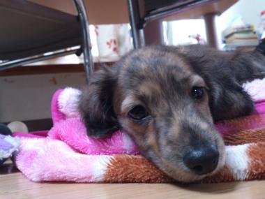 f:id:dog_life_saving:20130126230800j:image