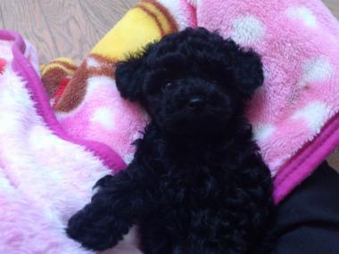 f:id:dog_life_saving:20130126231435j:image