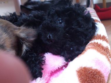 f:id:dog_life_saving:20130126231436j:image