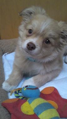 f:id:dog_life_saving:20130126234516j:image