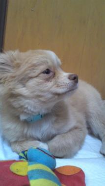 f:id:dog_life_saving:20130126234517j:image
