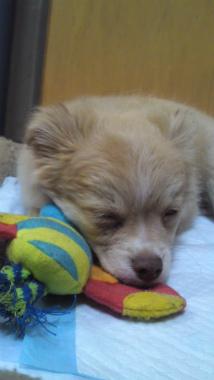 f:id:dog_life_saving:20130126234518j:image
