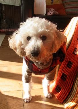 f:id:dog_life_saving:20130126235336j:image