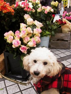f:id:dog_life_saving:20130126235337j:image