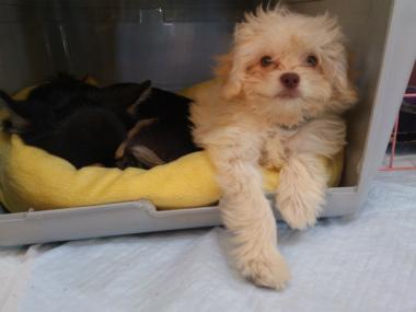 f:id:dog_life_saving:20130127000012j:image
