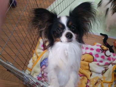 f:id:dog_life_saving:20130209232046j:image