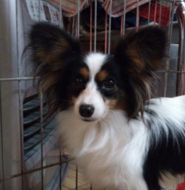 f:id:dog_life_saving:20130209232047j:image