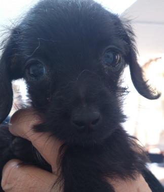 f:id:dog_life_saving:20130223230627j:image