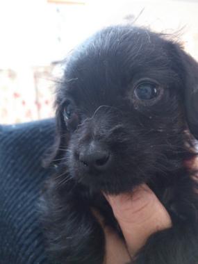 f:id:dog_life_saving:20130223230628j:image