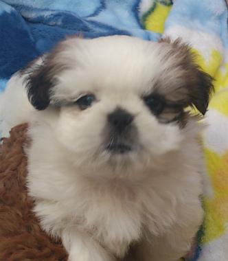 f:id:dog_life_saving:20130223231429j:image
