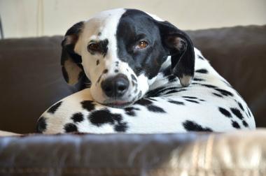 f:id:dog_life_saving:20130224082804j:image