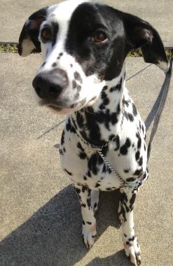 f:id:dog_life_saving:20130224082805j:image