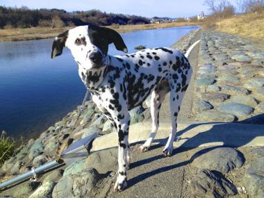 f:id:dog_life_saving:20130224082806j:image