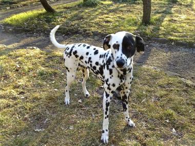f:id:dog_life_saving:20130224082807j:image