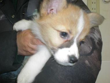 f:id:dog_life_saving:20130224085111j:image