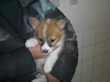 f:id:dog_life_saving:20130224085112j:image