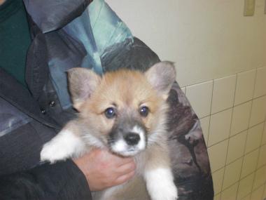 f:id:dog_life_saving:20130224085114j:image